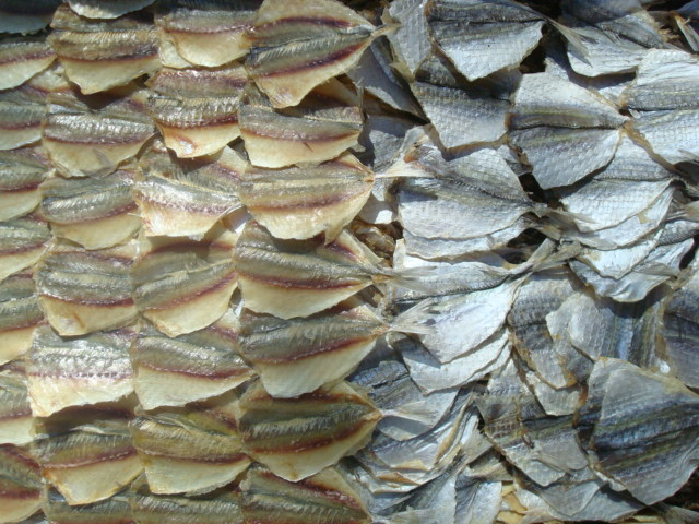 yellow stripe trevally fillet ,dried
