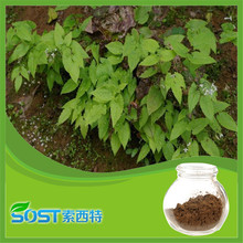 2016 new product natural Epimedium extract capsules