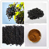 100% High Quality Pure natural Ligustrum Extract