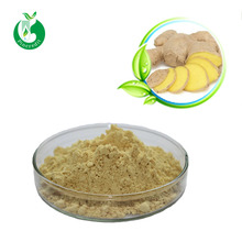 Wild ginger extract 2018 new product gingerols 10%-40%