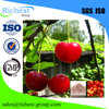Best Quality VC 17% acerola cherry fruit extract