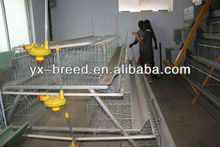 live birds and animals poultry equipment sale in uganda