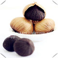 Clearance Black Garlic Powder
