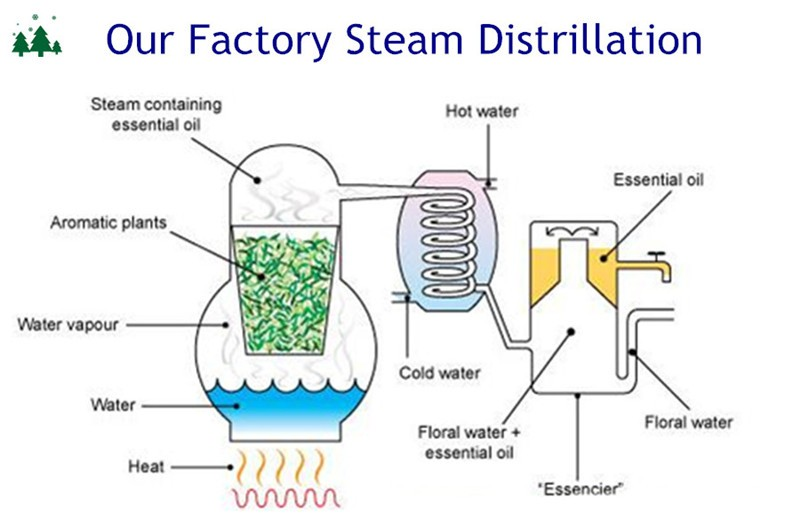simple and steam distillation