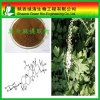 Natural Black Cohosh Extract P.e / Triterpenoides Saponis >3% Hplc /triterpenoides Saponis/High Quality Gotu Kola Extract