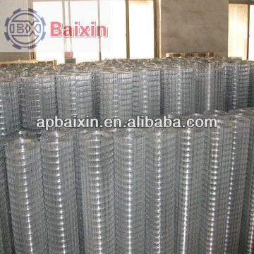 China factory supply best sell bird cage welded wire mesh roll/steel matting galvanized welded wire mesh
