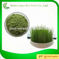wheat grass powder health benefits water soluble wheat grass leaf powder healthy grass drink