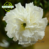 Factory Direct Sell High Quality Purple Carnations And Carnations Stem Artificial Flower