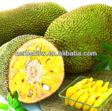 Jackfruit Seeds For Growing