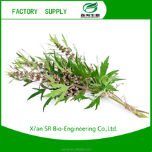SR Chinese Natural Plant Extract / Motherwort Herb Extract/10% Stachydrine/ Herba Leonuri