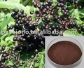 Highly Nature Herbal Extract Elderberry Extract in stock CAS No.: 84603-58-7