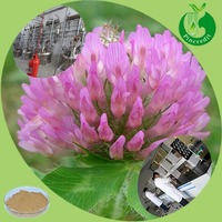 Red Clover/Red Clover Extract/Red Clover Extract Powder