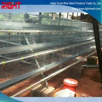 good price new price chicken egg poultry farm equipment