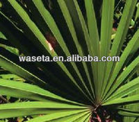 High Purery Saw Palmetto Extract with Low Price