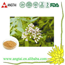 top quality Boneset Herb P.E.