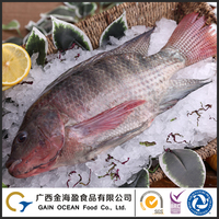 Good Taste Seafood Factory Direct Frozen Whole Round Tilapia Fish