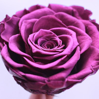 Premium Quality 4 5cm Wholesale Purple