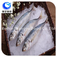 High Quality Frozen Seafood Blue Mackerel Scad Fish