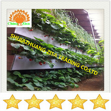 Completed Hydroponics NFT Systems for Vegetables