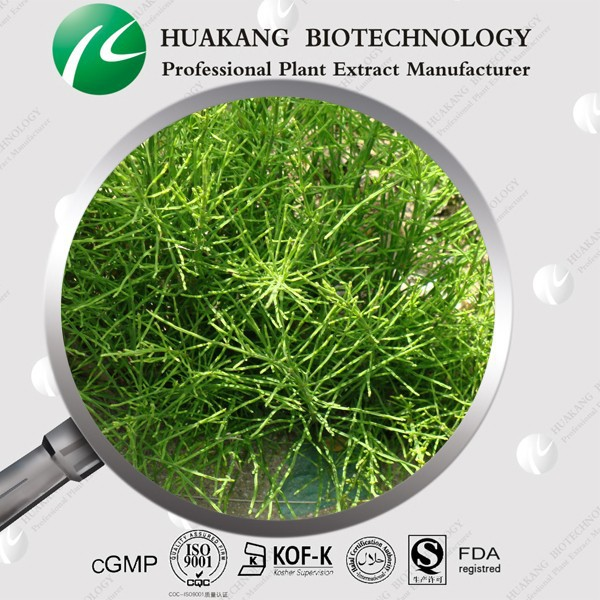 Horsetail Extract In Stock