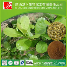 Alibaba China supply Organic Yerba Mate Concentrate Powder For Slimming Welcome Inquiry