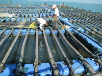 puncture resistant deck pe net fish farming cage
