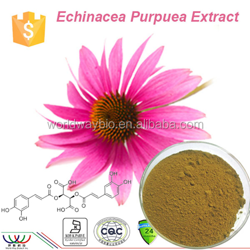 echinacea herb p.e 4% polyphenols natural powdered echinacea purpurea extracts
