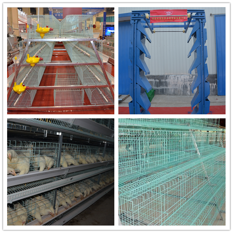 National Day promotion low price poultry battery laying hen cages for sale in philippines