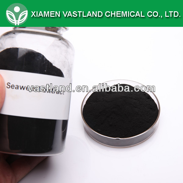 Brown seaweed powder seaweed extract
