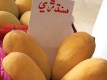 Mango exporters/suppliers/distributers from Pakistan,