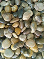 patio mixed pebble stone export