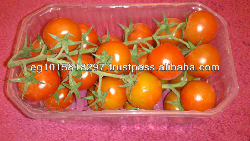 fresh cherry tomato with high quality