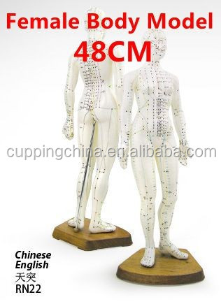 48CM English Medical Female Human Body Acupuncture Point Model