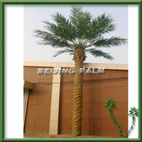 Decorative Middle East Canary Palm tree