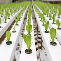 Agricultural Greenhouse Flat Hydroponics Commercial Hydroponics
