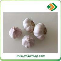 china agriculture wholesale best quality farm fresh natural garlic