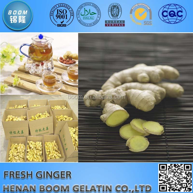 China Fresh Ginger And Garlic Hot Sale