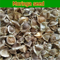 Moringa oleifera Seeds Indian Drumstick Seeds