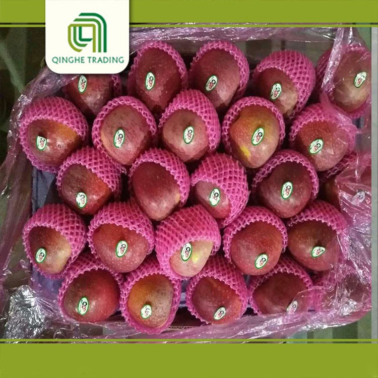 cheap fresh apples red qinguan apple fruit for sale