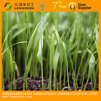 Good Price of Liquid State Plant Growth Regulator Paclobutrazol 25% SC, 15% WP, 95% TC for Plant Growth Regulator (CAS76738-62)