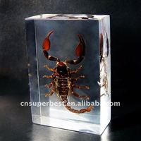 Resin or Acrylic Block with insect inside