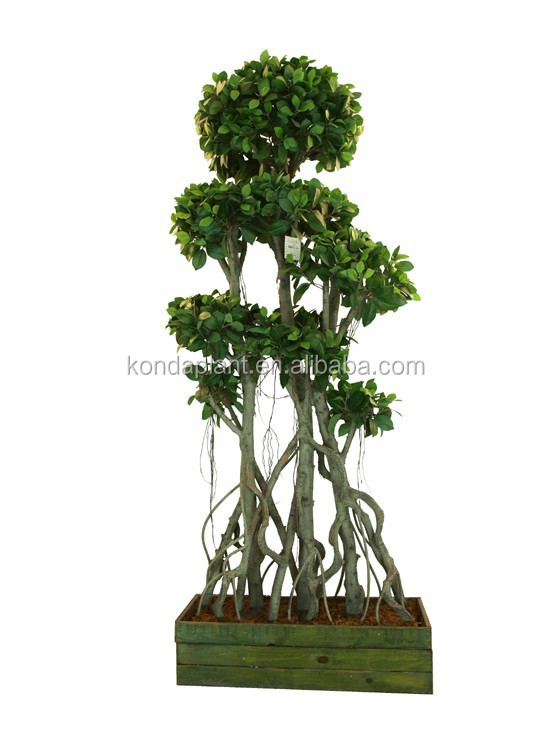 gros pas cher artificielle plantes et arbres ficus bonsai. Black Bedroom Furniture Sets. Home Design Ideas