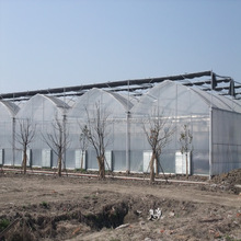 Cheap strawberry greenhouse for grape