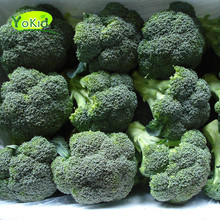 New crop high quality bulk fresh vegetable broccoli
