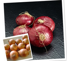 Fresh red onion and white onion .good quality and price ,shandong of china