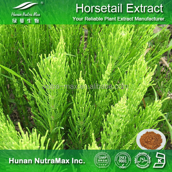 Free Sample Herbal Ingredient Pharmaceutical Raw Material Horsetail Herb Extract Horsetail Extract Powder