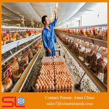chicken layer farm / chicken farm project poultry farming equipment for sale