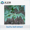 Best selling Buchu Leaf Extract, Buchu Extract, Buchu Leaf P.E. made in China