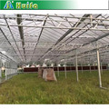 100% sabic UV coated roof polycarbonate sheet greenhouses