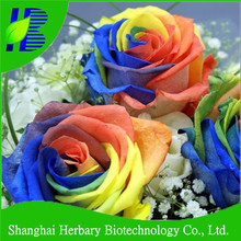 2017 Latest rainbow rose flower seeds for sale